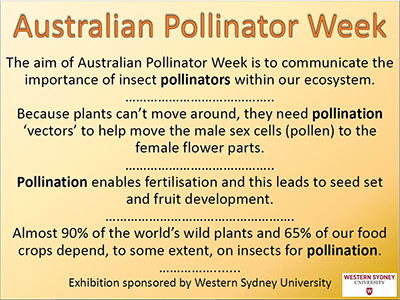 Why Australian Pollinator Week is important.