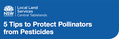 5 Tips To Protect Pollinators From Pesticides